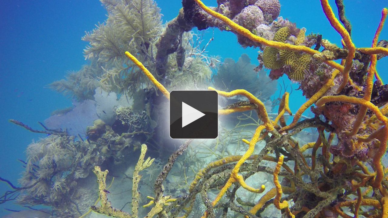 GoPro Hero4 Black Underwater Review