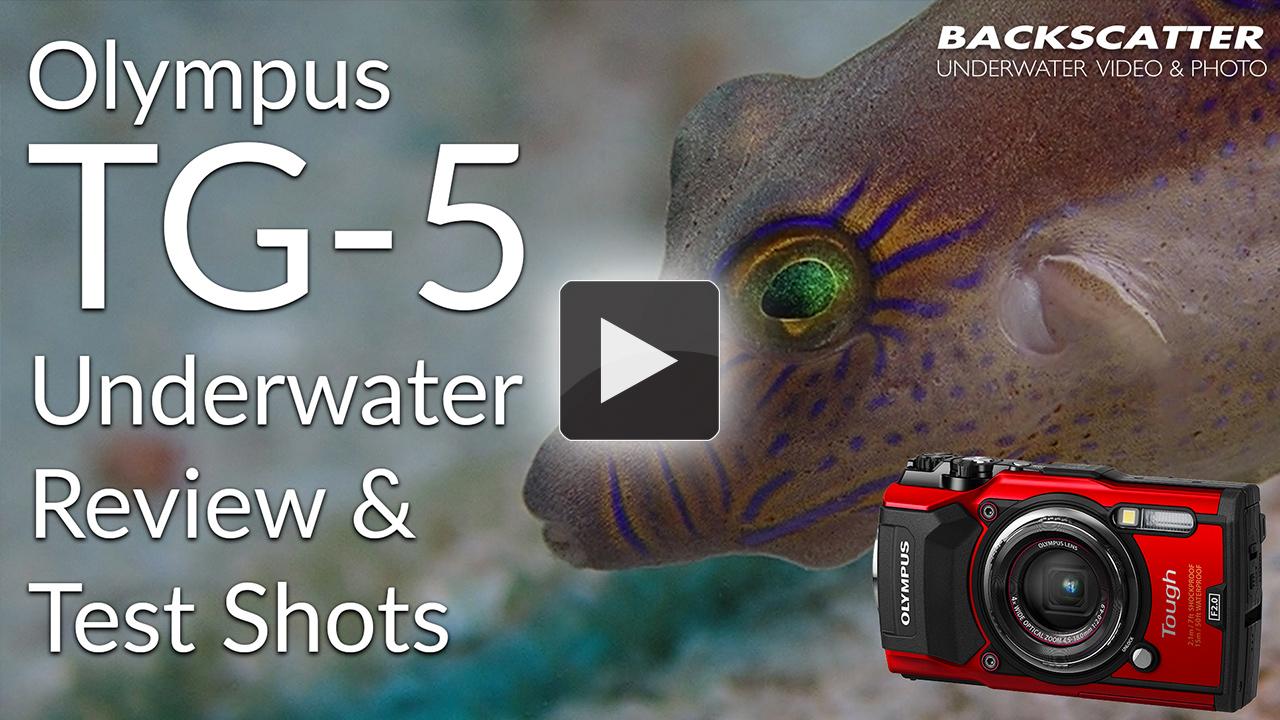Olympus Tough Tg 5 Underwater Review The Digital Shootout