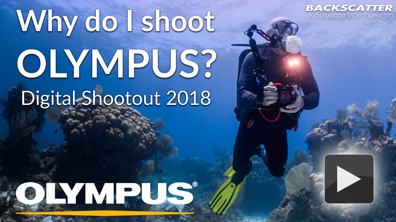 Why do I shoot Olympus?